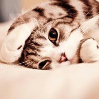 可爱猫咪萌宠