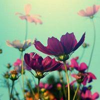 美美的花儿丶