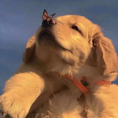 这么可爱的狗狗谁能比?!